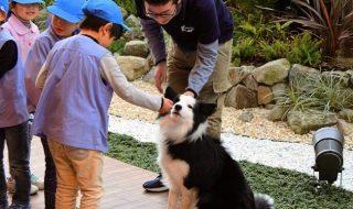 ホテルで園児が犬との触れ合い