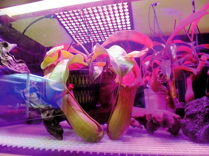 浦安点描:この写真の正体は? 正解は食虫植物