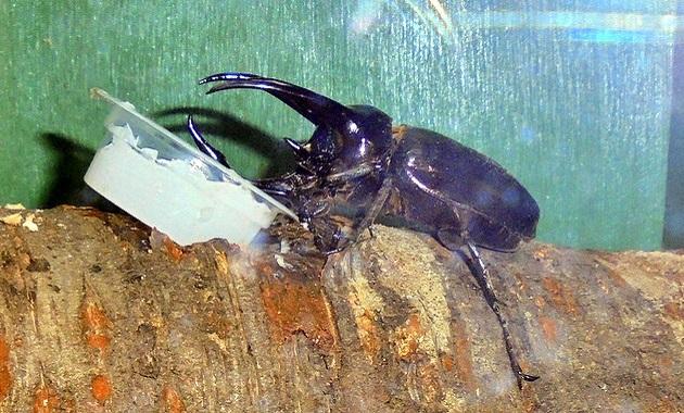 世界の虫を間近で見よう! 食虫植物も、子供でにぎわう