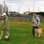 愛犬をジャンプアップ 災害救助犬・訪問活動犬に