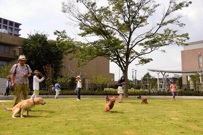 浦安公園ドッグラン
