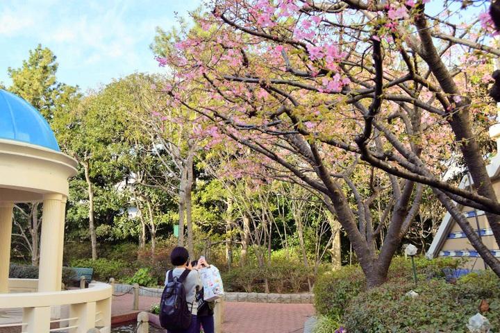 イクスピアリの庭園「オリーブと噴水の広場」