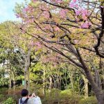 浦安点描:春の訪れを楽しめるイクスピアリの庭園「オリーブと噴水の広場」